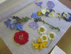 押し花の素材