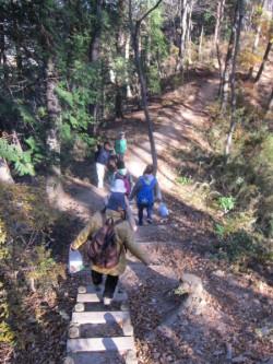 階段が整備されている山道