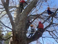 高さ8メートルを目指して木登り中