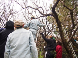 梅の木の切り方について説明を受ける参加者