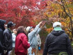広葉樹の手入れ方法を教わる参加者